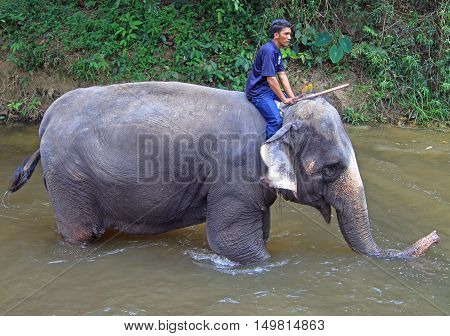 Man Is Bathing Elephant In The River