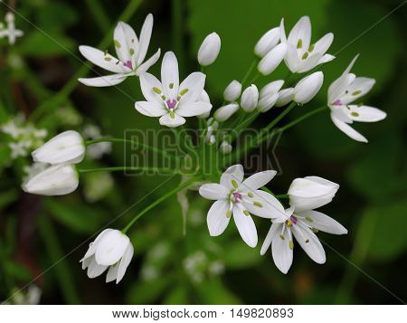 Stock Photo: Beautiful wild flowers in the forest.