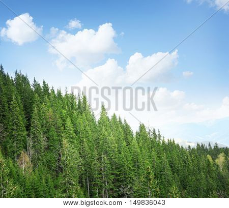 Spring forest on mountain slopes and blue sky background