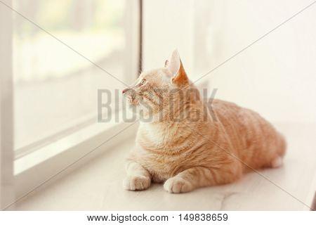 Cute cat on windowsill