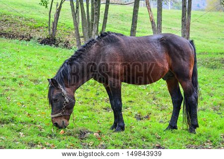 Young stallion on a green meadow eating yellow corn