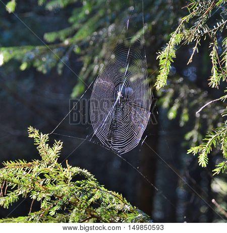 Water drops on a spider web southern Bohemia Czech Republic