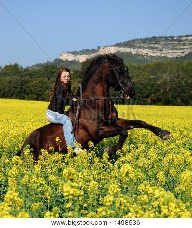 Sich aufbäumenden Pferd
