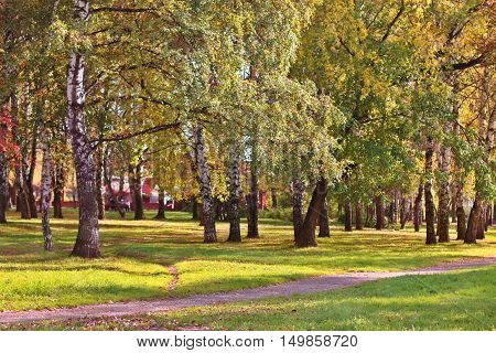 Asphalt path in park among birch trees and green grass on summer day