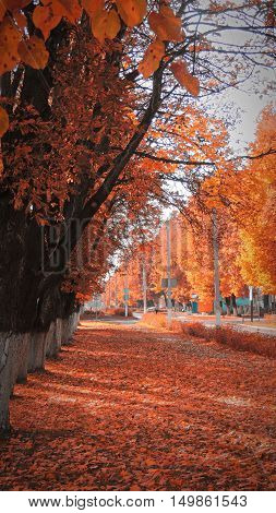 City street in autumn looks amazing and colorfull