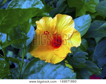 Vibrant fire red and butter yellow coloured flower