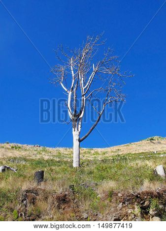 Parched tree in the mountains against the blue sky