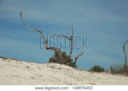 Driftwood on Beach Cumberland Island National Seashore Georgia