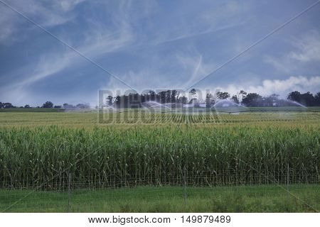Landscape of Corn Field Being Watered under a Blue Cloudy Sky
