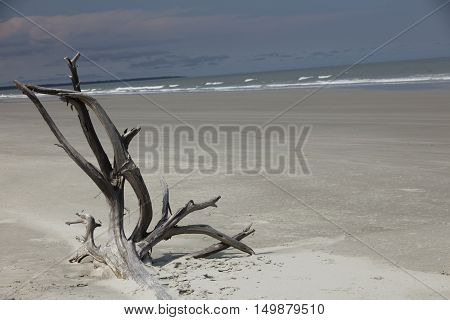 View of Driftwood on the Beach Cumberland Island National Seashore Georgia