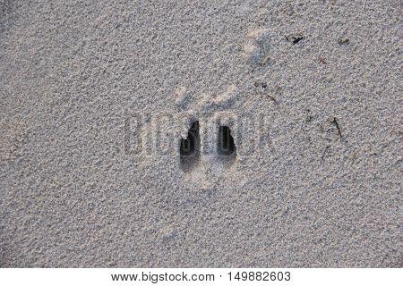 Deer tracks in wet sand in Michigan