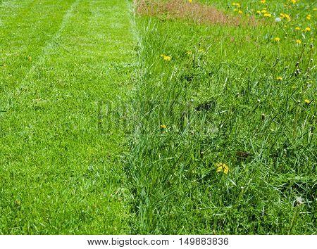 Fresh green grass lawn half recently mowed half uncut.