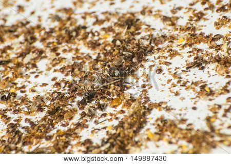 Honey bee beehive residue mixed with pollen and dead varroa acarid