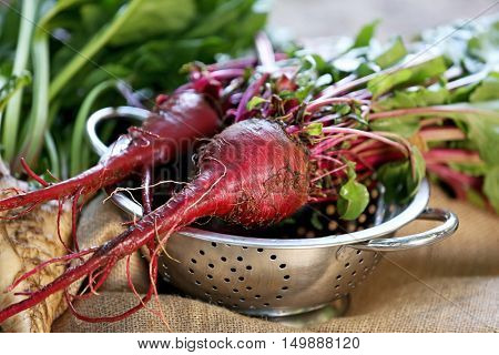 Young beets in strainer and bagging
