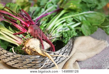 Young beets in wicker basket and bagging