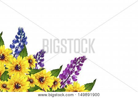 Blue lupines beautiful flowers on a white background. rudbeckia