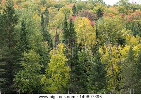 A colorful forest in the fall season