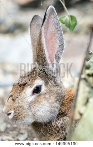 Cute rabbit with big ears in spring forest.