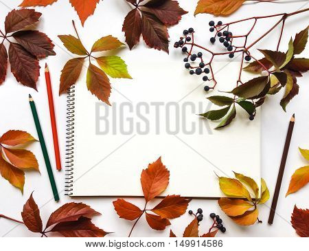 Autumn composition with sketchbook and pencils on white background decorated with red leaves and berries of virginia creeper. Flat lay top view view from above