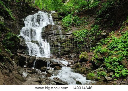 Forest Waterfall And Rocks