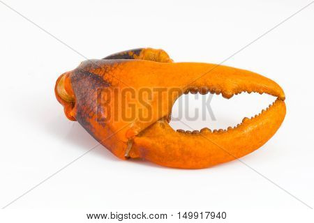 boiled crab claw isolated on white background