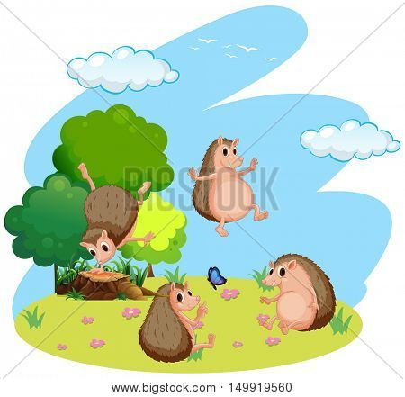 Four hedgehog in the field illustration