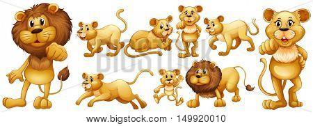 Lion and lioness group