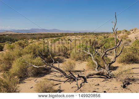 Fallen Tree In Mojave Desert
