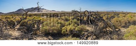 Dead Trees In Mojave Desert