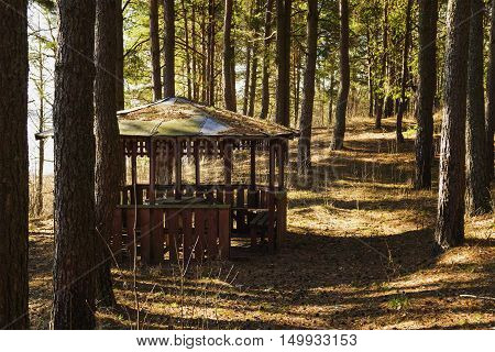 Aging wooden summerhouse in pine wood by springtime