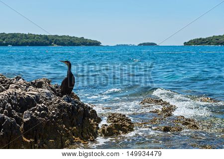 Cormorant on the rocky beach in Istria, Croatian coast