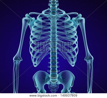 Human skeleton: breast chest. Xray front view. Medically accurate 3D illustration