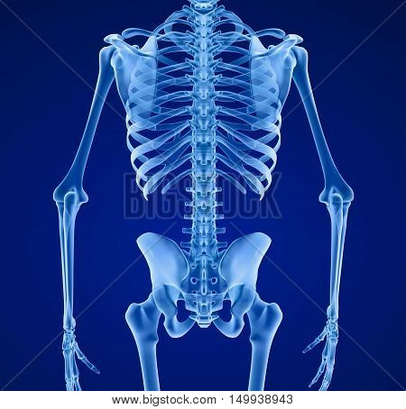 Human skeleton Medically accurate 3d illustration .