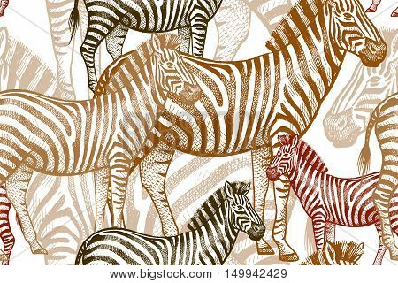 Seamless vector pattern with African animals. Colored Zebra on a white background. Template to create fabric Wallpaper paper textiles curtains design summer clothes in the style of Safari.