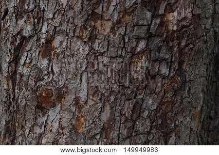 Texture of the bark of an old tree to implement background
