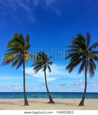 Untouched tropical beach with palms.