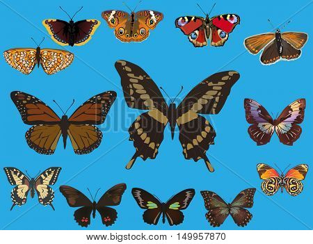 illustration with thirteen butterflies isolated on blue background
