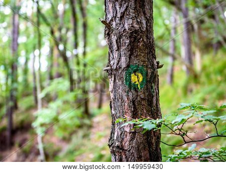Mountain Trail Marker On A Spruce Or Pine Tree.