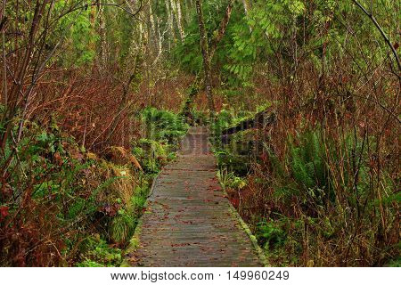 a picture of an exterior Pacific Northwest forest boardwalk hiking trail in winter