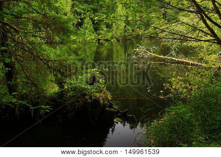 a picture of an exterior Pacific Northwest forest an fresh water pond