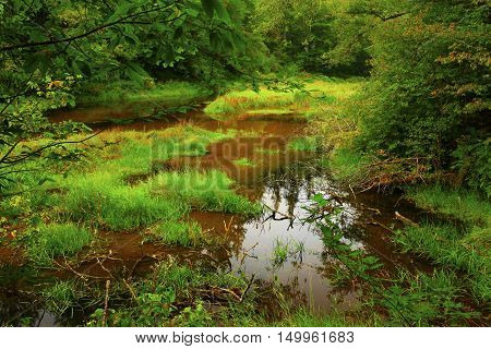 a picture of an exterior Pacific Northwest forest and fresh water pond with grasses