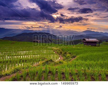 Sunset And Green Terraced Rice Field In Pa Pong Pieng , Mae Chaem, Chiang Mai, Thailand.