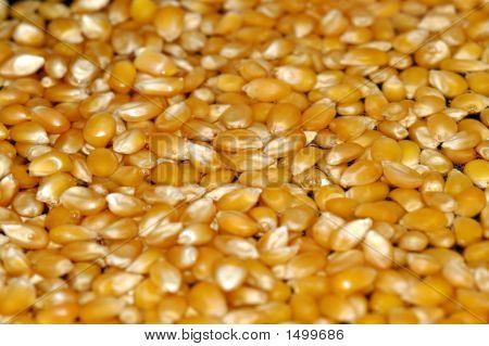 Popcorn Kernels In Oil2