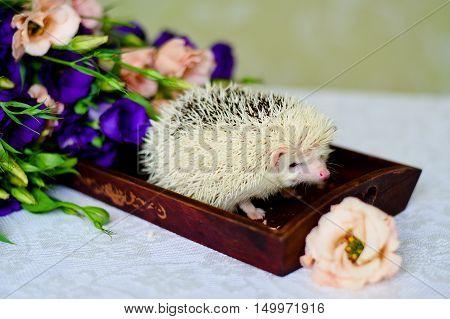White hedgehog nestled next to a wedding bouquet.