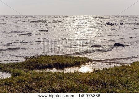 autumn sea grass during sunset with rocks and ducks