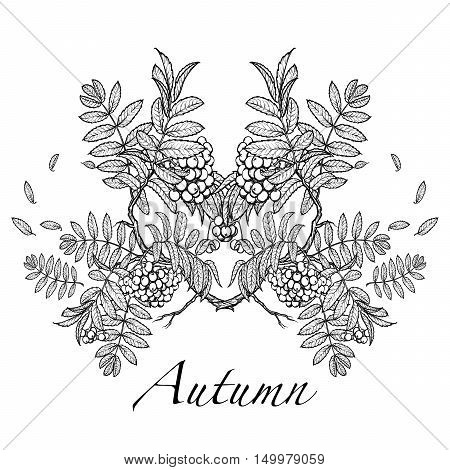 Wind stripping leaves off the Rowanberry branch. Autumn mood. Hand drawn sketch isolated on white background. Calendar design. EPS10 vector illustration.