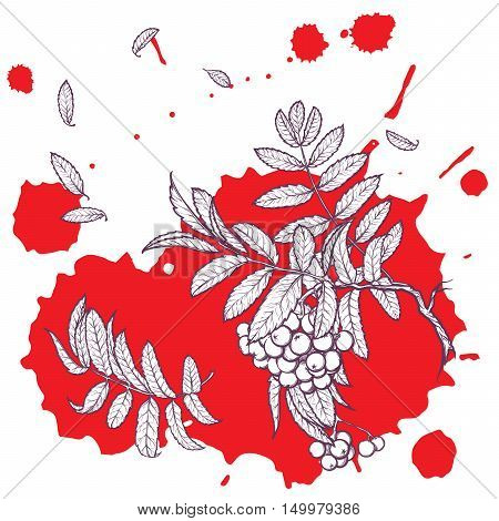 Wind stripping leaves off the Rowanberry branch. Red paint grunge spot background. Autumn mood. Hand drawn sketch isolated on white background. EPS10 vector illustration.