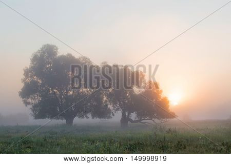 Thick Fog In The Grove