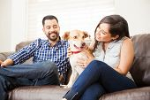 Cute Dog Sitting In A Couch At Home poster