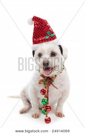 Christmas Dog With Jingle Bells